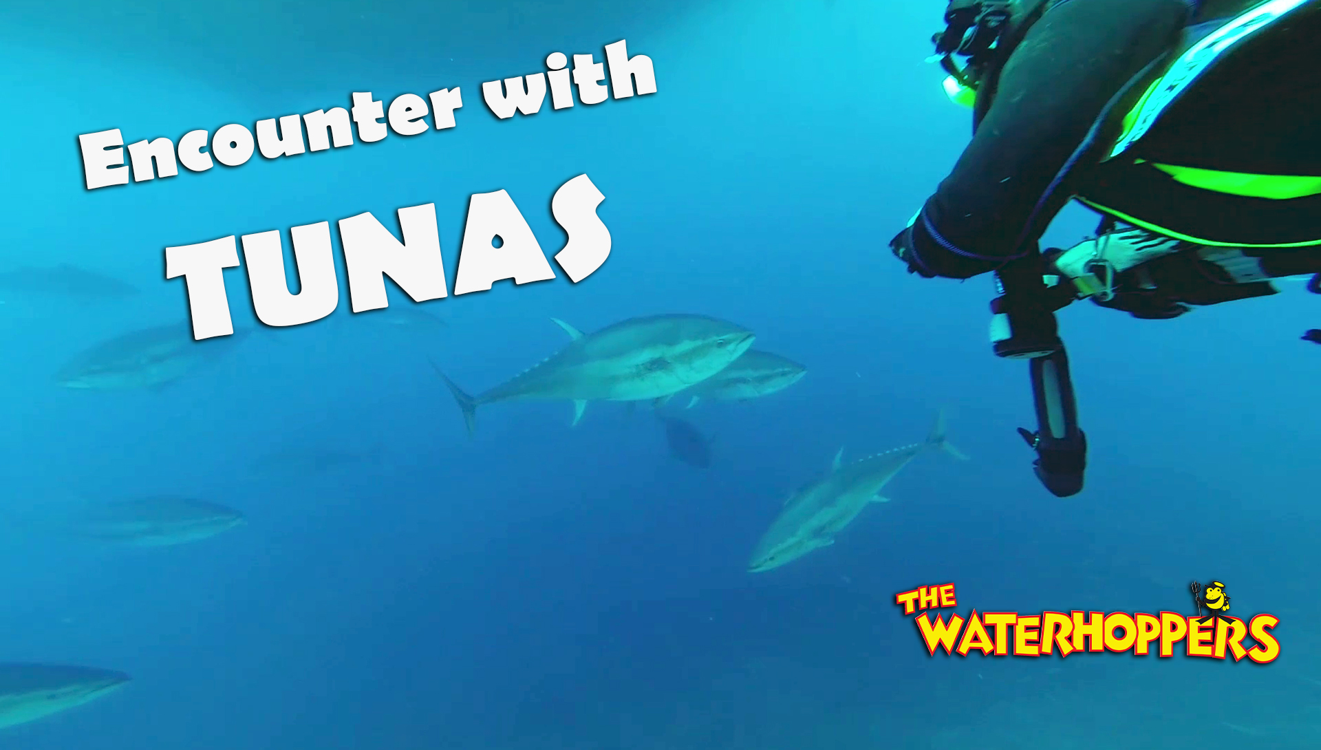 Lucky Divers encounter Tunas